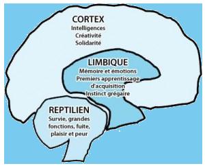 Cerveau reptilien, limbique et néo-cortex